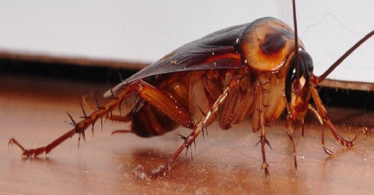 Dedetizadora de Mosquito da Dengue | Valor Dedetização SP