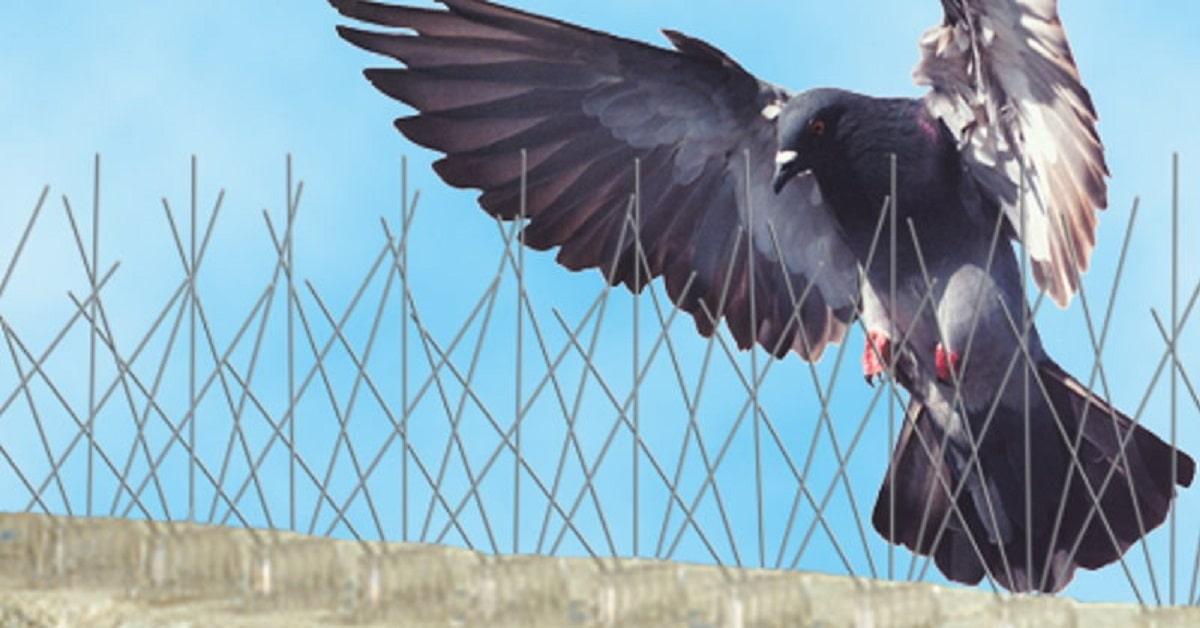 ÁGUAS DE SÃO PEDRO - SP : Controle de Pombo 24 Horas | Acabar com os Pombos